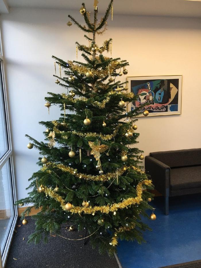 Media Library - Christmas tree 2017